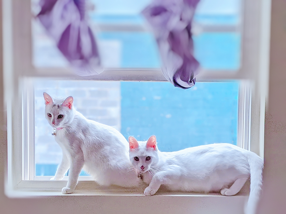 Miss Moody Lilac buttons and pinky in the window